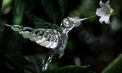 Colibri HD pics