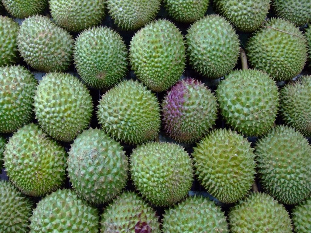 Durian HD pics
