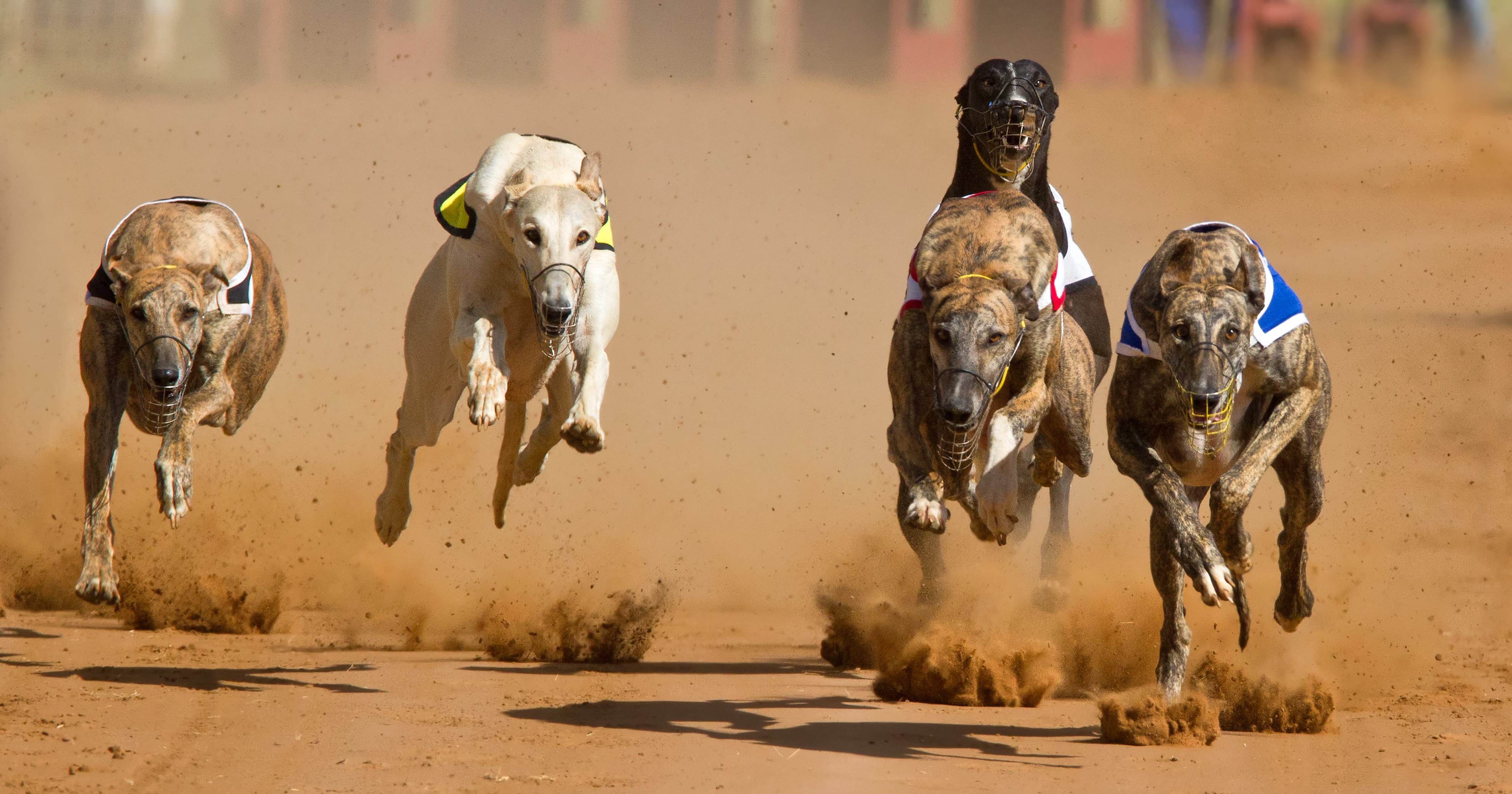 Greyhound HD pics