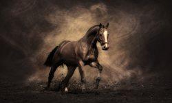 Horse HD pics