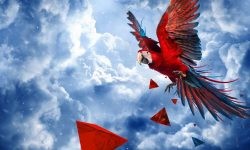 Scarlet macaw HD pics