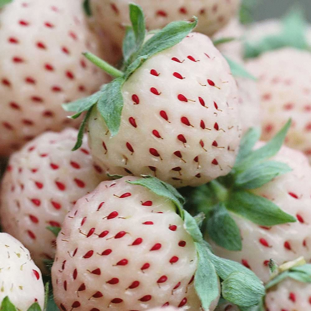 White strawberries widescreen wallpapers