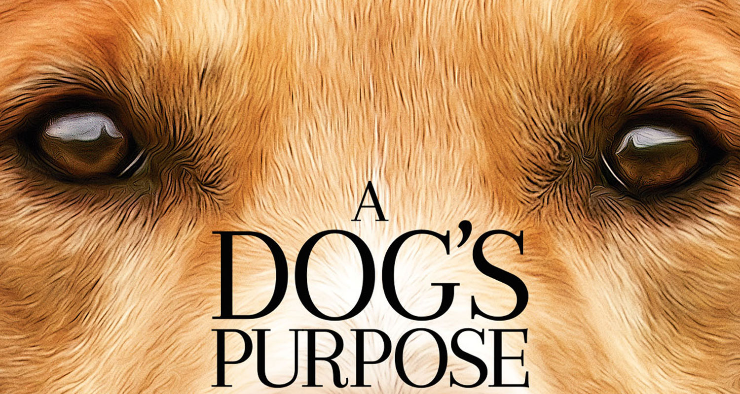 A Dog's Purpose Backgrounds