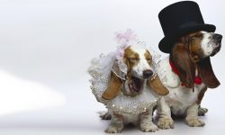 Basset Wallpapers hd