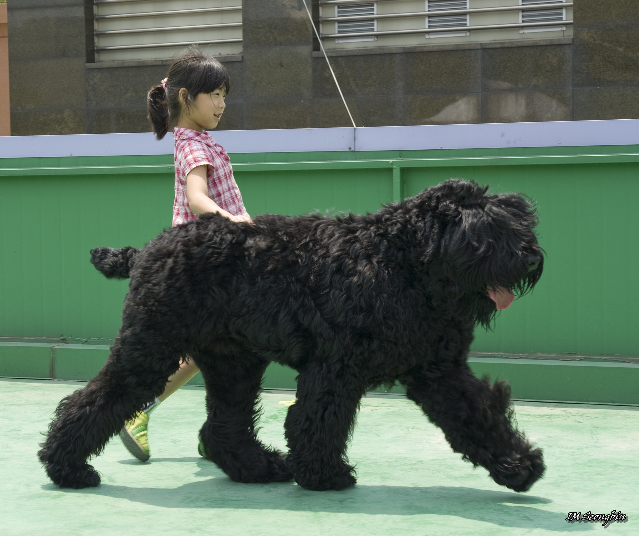Black Russian Terrier Wallpapers hd