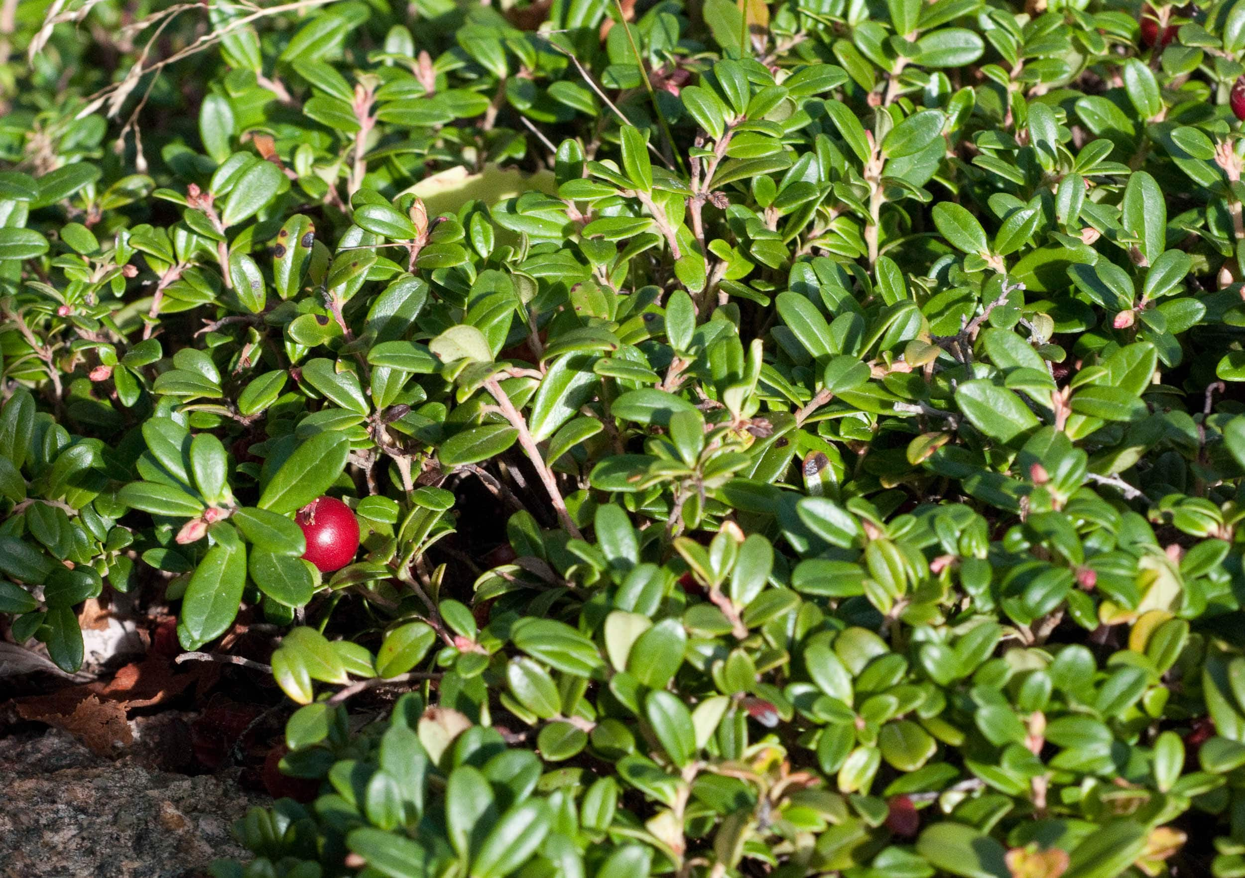 Cowberry Pictures