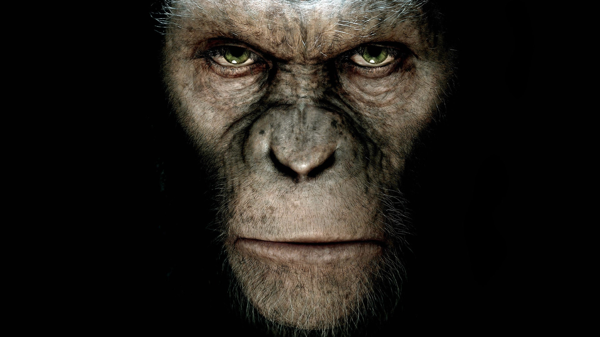 Dawn of the Planet of the Apes Wallpapers hd