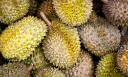 Durian Wallpapers hd