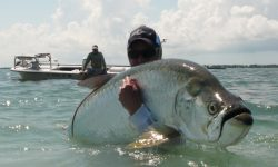 Fighting tarpon Pictures