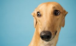 Greyhound Wallpapers hd
