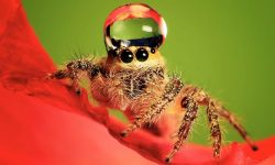 Jumping spider Wallpapers hd