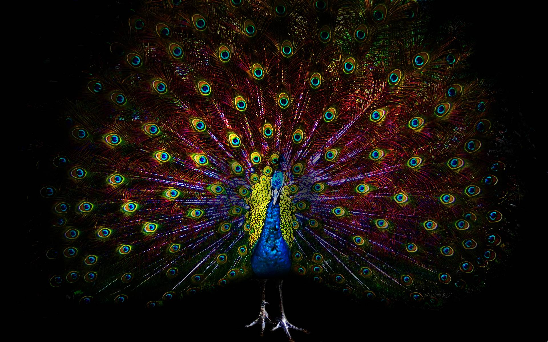 Peacock Wallpapers hd
