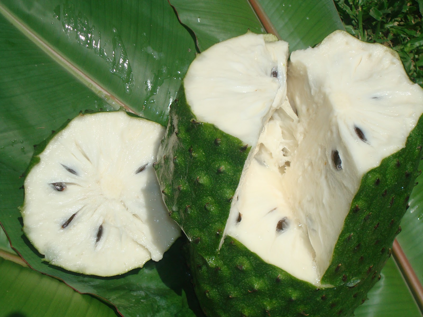 Soursop Wallpapers hd