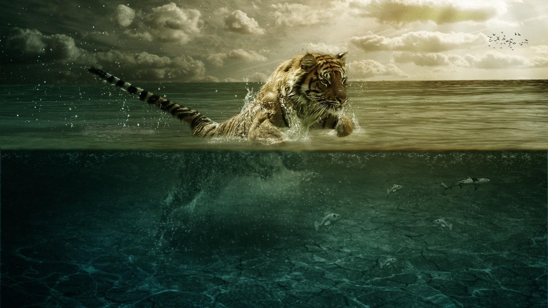 Tiger HD pics