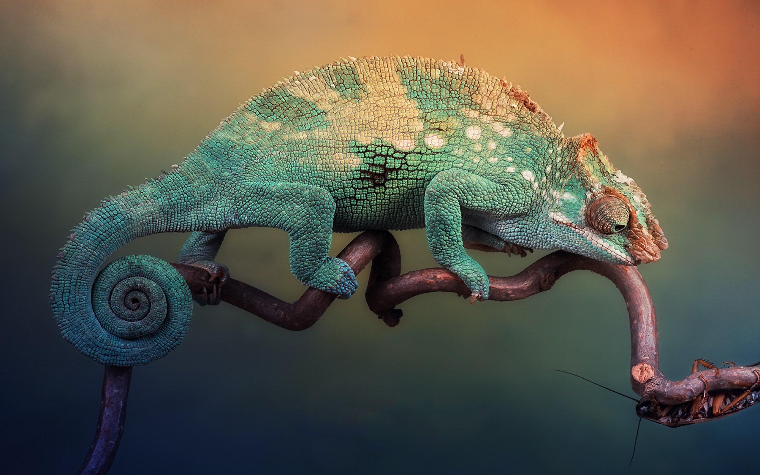 Chameleon Backgrounds