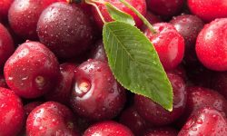 Cherry Backgrounds