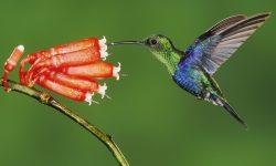 Colibri Backgrounds