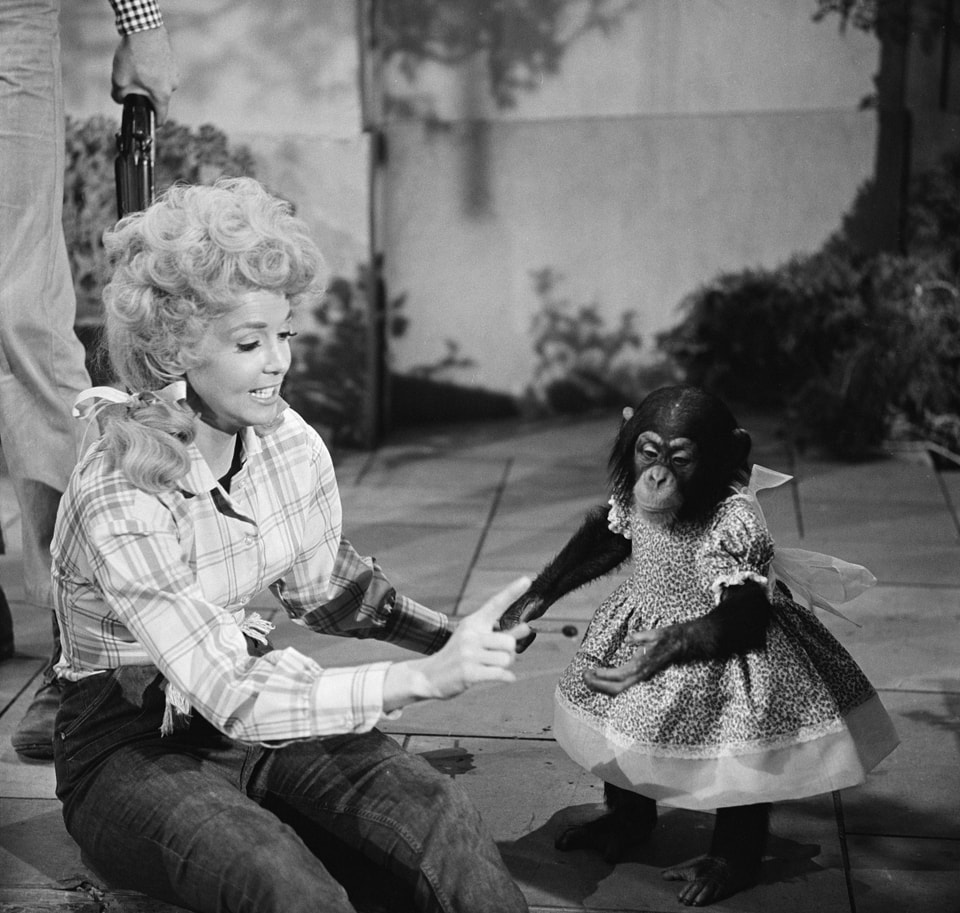 Donna Douglas Backgrounds