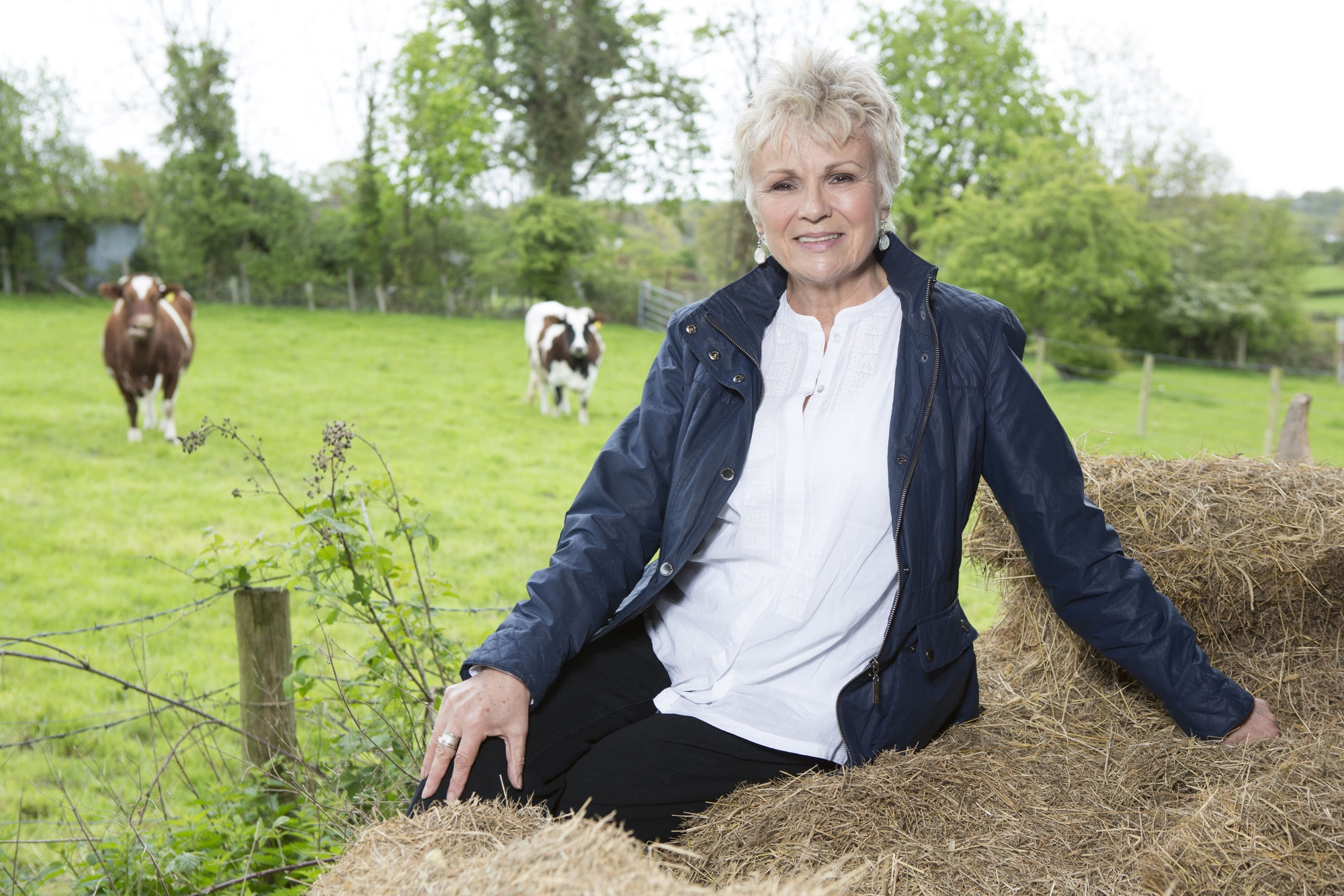 Julie Walters Backgrounds