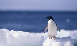 Penguin Backgrounds