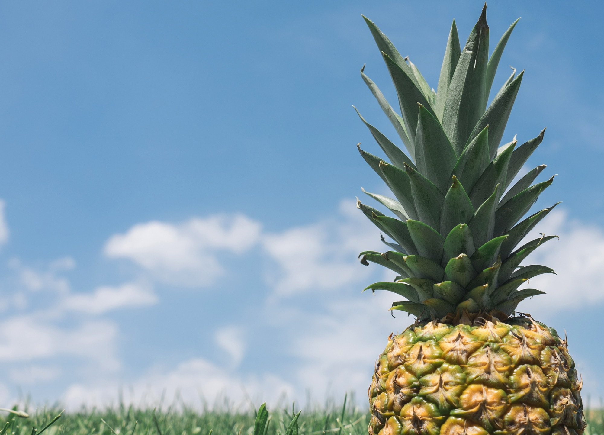 Pineapple Backgrounds