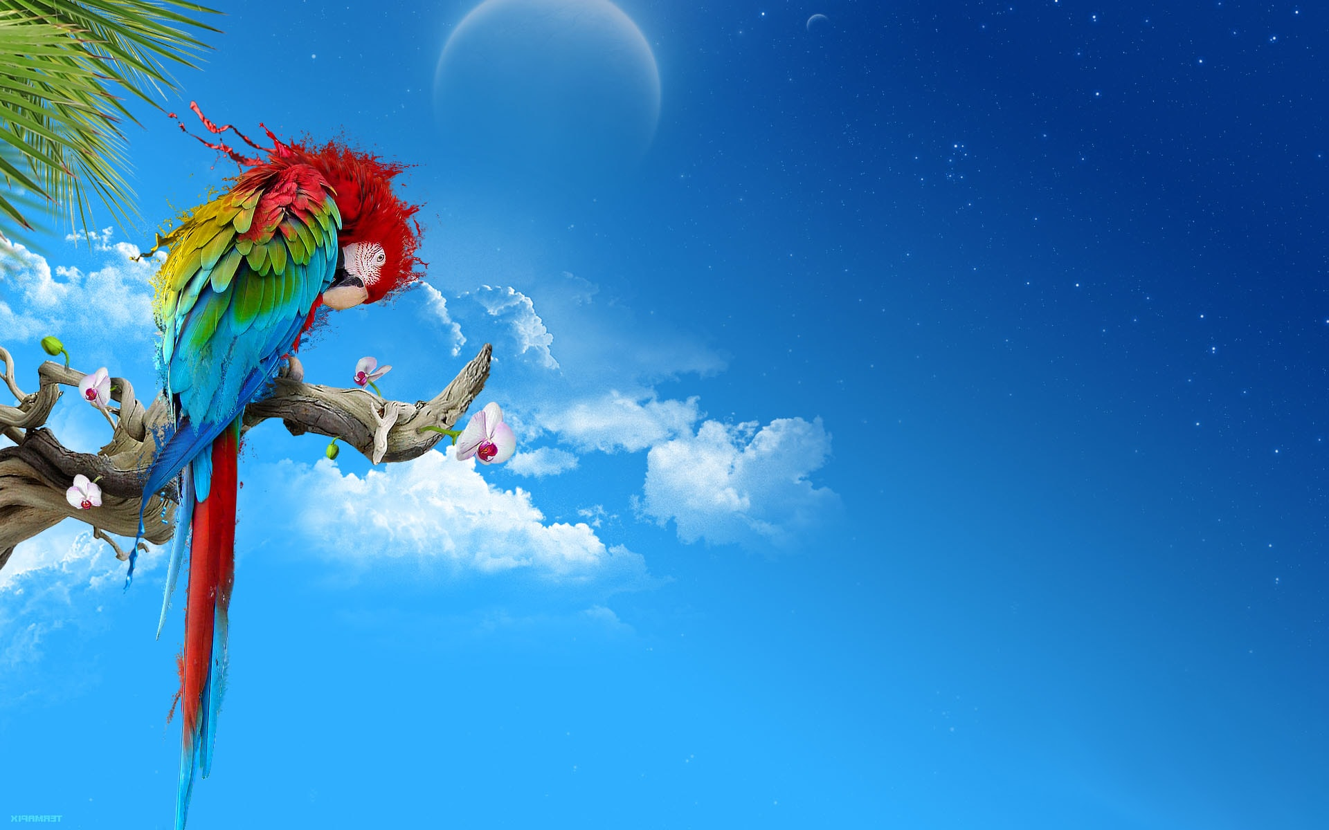 Scarlet macaw Backgrounds