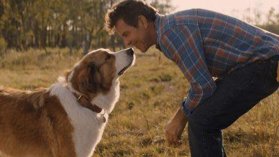 A Dog's Journey Widescreen for desktop