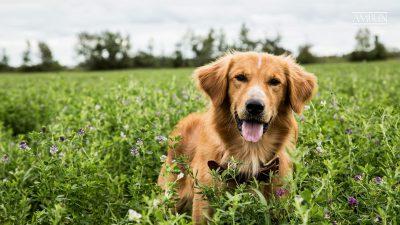 A Dog's Journey HD pics