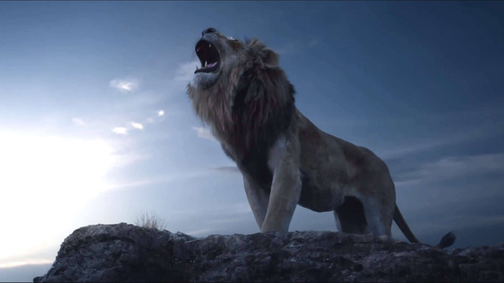The Lion King Hd Wallpapers 7wallpapersnet