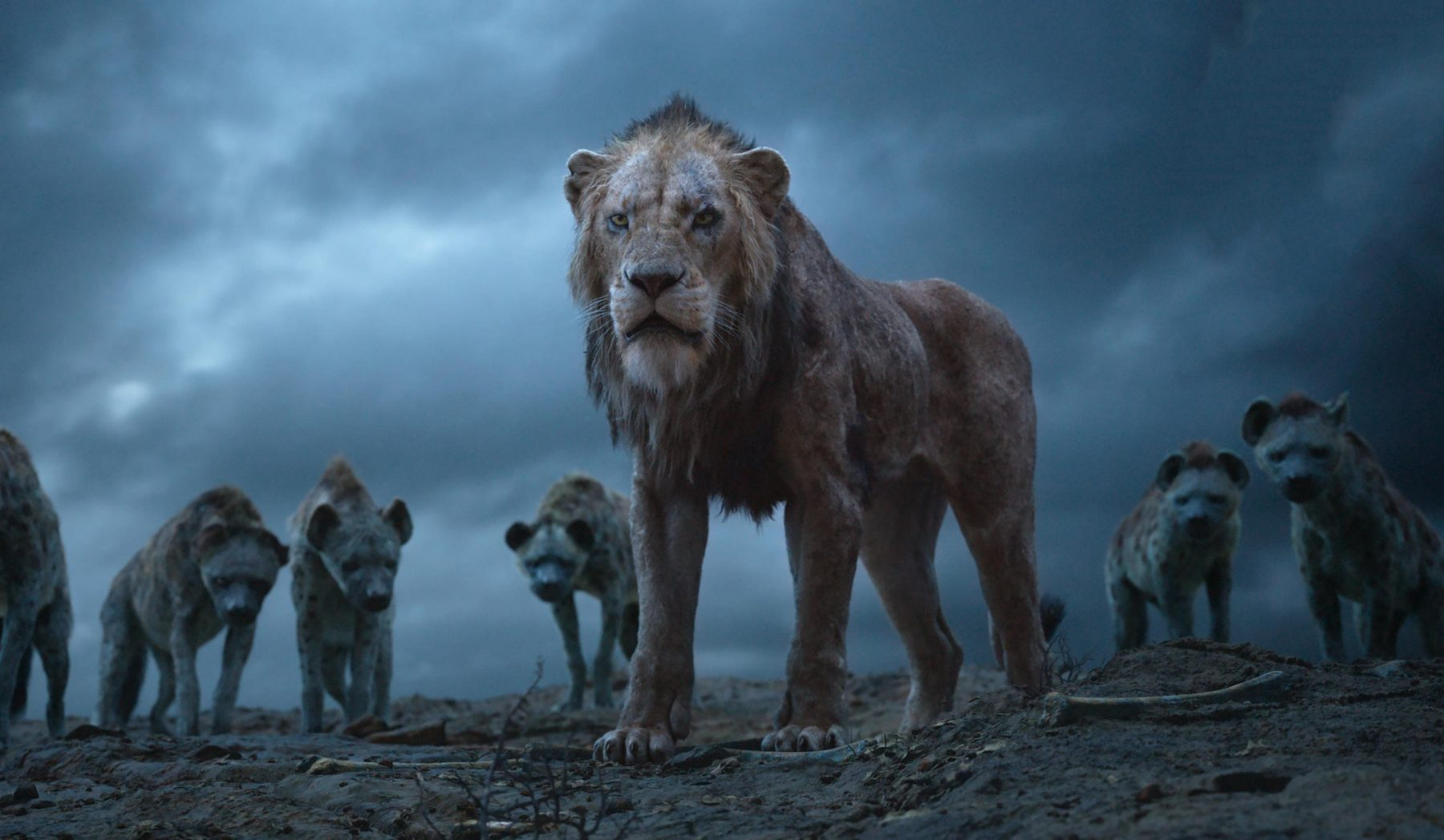 The Lion King 24
