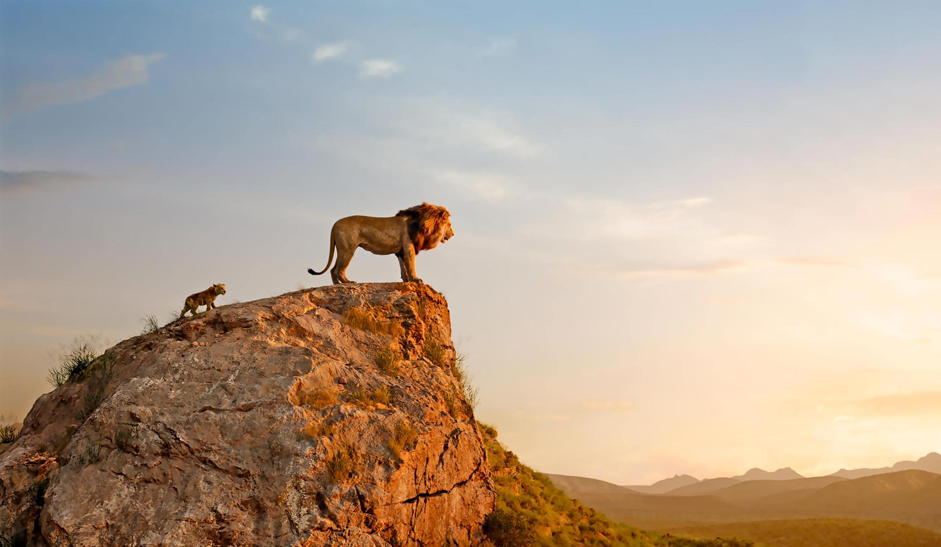 The Lion King 25