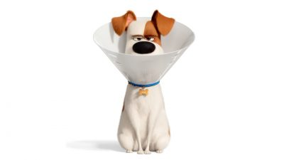 The Secret Life of Pets 2 Tablet PC wallpapers