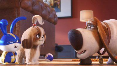 The Secret Life of Pets 2 Screensavers free